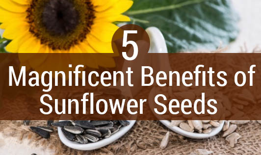 5 Magnificent Benefits of Sunflower Seeds