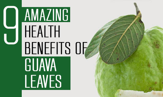9 Amazing Health Benefits of Guava Leaves
