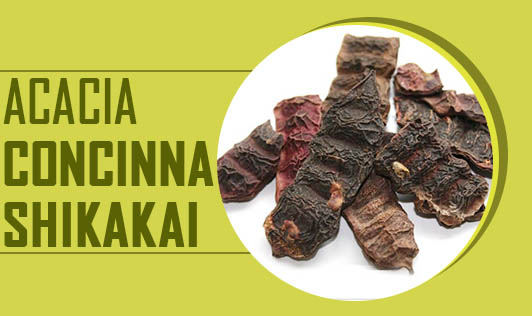 Acacia Concinna - Shikakai