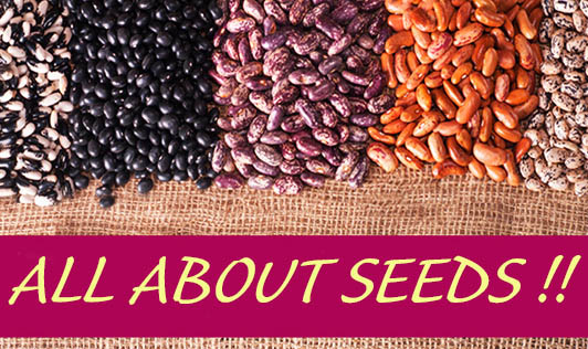 All about Seeds !!