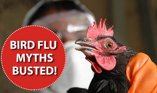 Bird Flu Myths Busted!