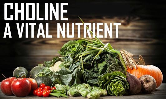 Choline - A Vital Nutrient