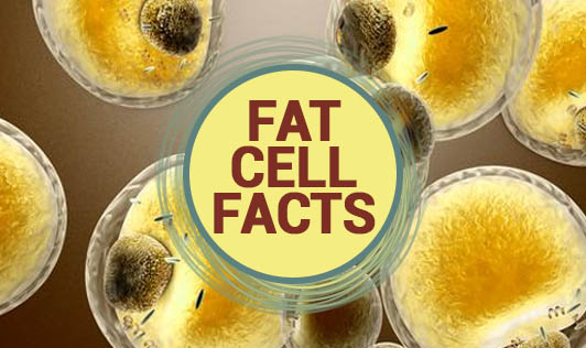 Fat Cell Facts