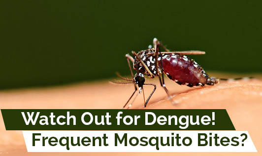 Frequent Mosquito Bites? Watch Out for Dengue!
