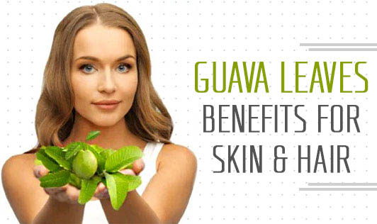 Guava Leaves: Benefits for Skin & Hair