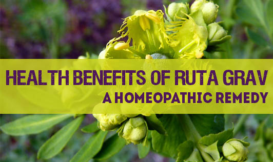 Health Benefits of Ruta Grav - A Homeopathic Remedy