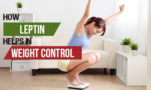 How Leptin Helps in Weight Control