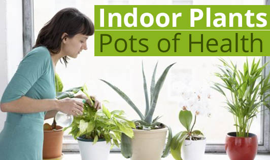 Indoor Plants - Pots of Health