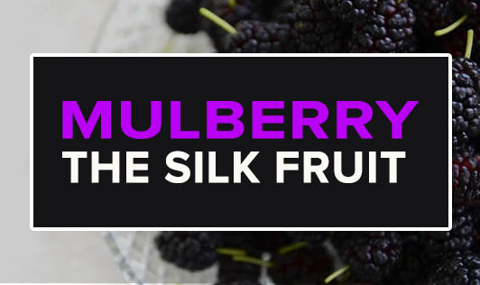 Mulberry, The Silk Fruit