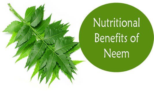 Nutritional Benefits of Neem