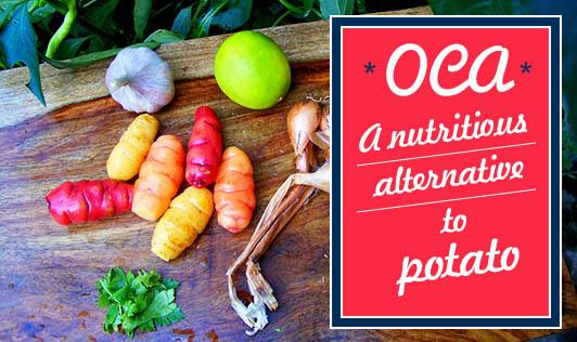 Oca- A nutritious alternative to potato