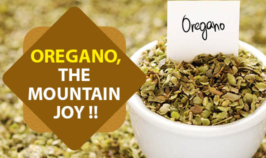 Oregano, The Mountain Joy !!