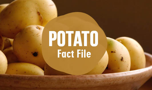 Potato: Fact File