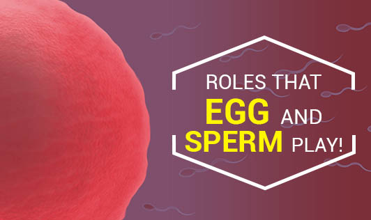 Roles That Egg And Sperm Play!