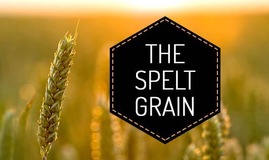 The spelt grain