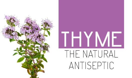 Thyme- The natural antiseptic