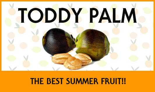 Toddy Palm Fruit- The Best Summer Fruit!!