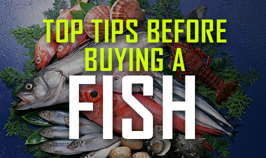Top tips before buying a fish