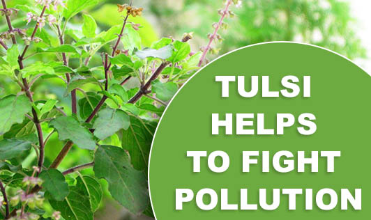 Tulsi Helps To Fight Pollution