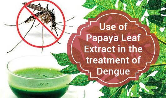 Use of Papaya Leaf Extract in the treatment of Dengue