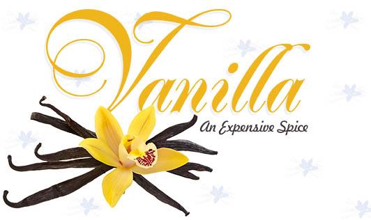 Vanilla- An Expensive Spice