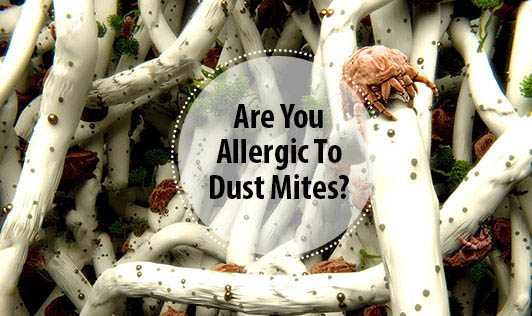 Are You Allergic To Dust Mites?