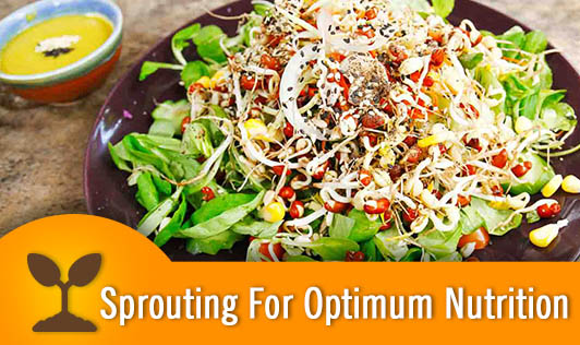 Sprouting For Optimum Nutrition
